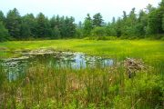 Carleton to Host 2016 Herzberg Lecture on the Importance of Wetlands