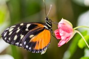 2017 Biology Butterfly Show Lifts Off at Carleton University
