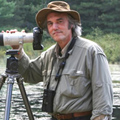 Michael Runtz speaks to the Globe and Mail about the annual Christmas bird count.
