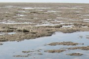 Science Café – Multiple Impacts of Environmental Change on Lake and River Ecosystems