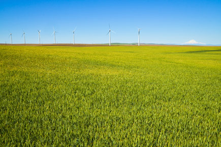 Wind Turbines with field and mountain