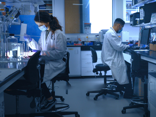 Neuroscience students working in a lab.