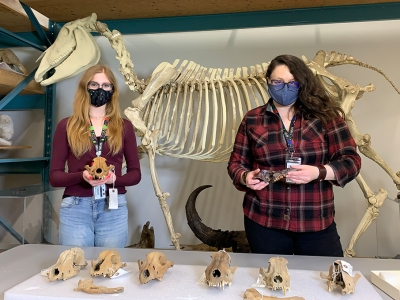 Photo for the news post: Carleton Undergrad's Research Discovers Ancient Gray Wolves Adapted to Survive