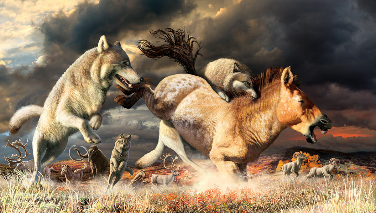 Gray wolves take down a horse on the mammoth-steppe habitat of Beringia during the late Pleistocene (around 25,000 years ago). CREDIT: Julius Csotonyi, Government of Yukon