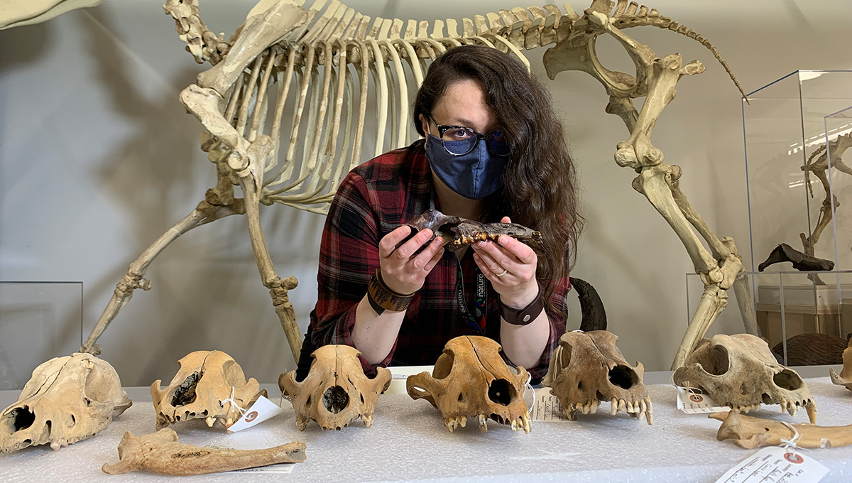 Prof. Danielle Fraser with some of the gray wolf specimens used in the study.