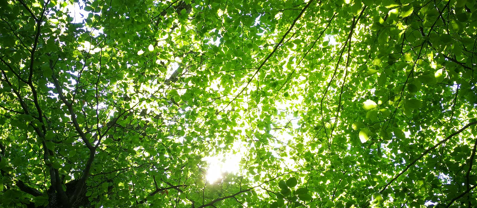 A photo taken under trees pointed up towards the sky, with sunlight shining through