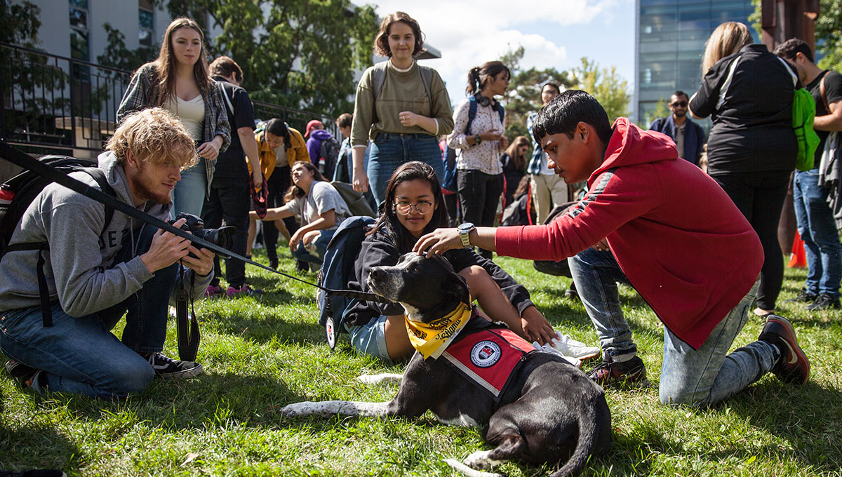 Carleton Adds Six New Dogs to Popular Therapy Program