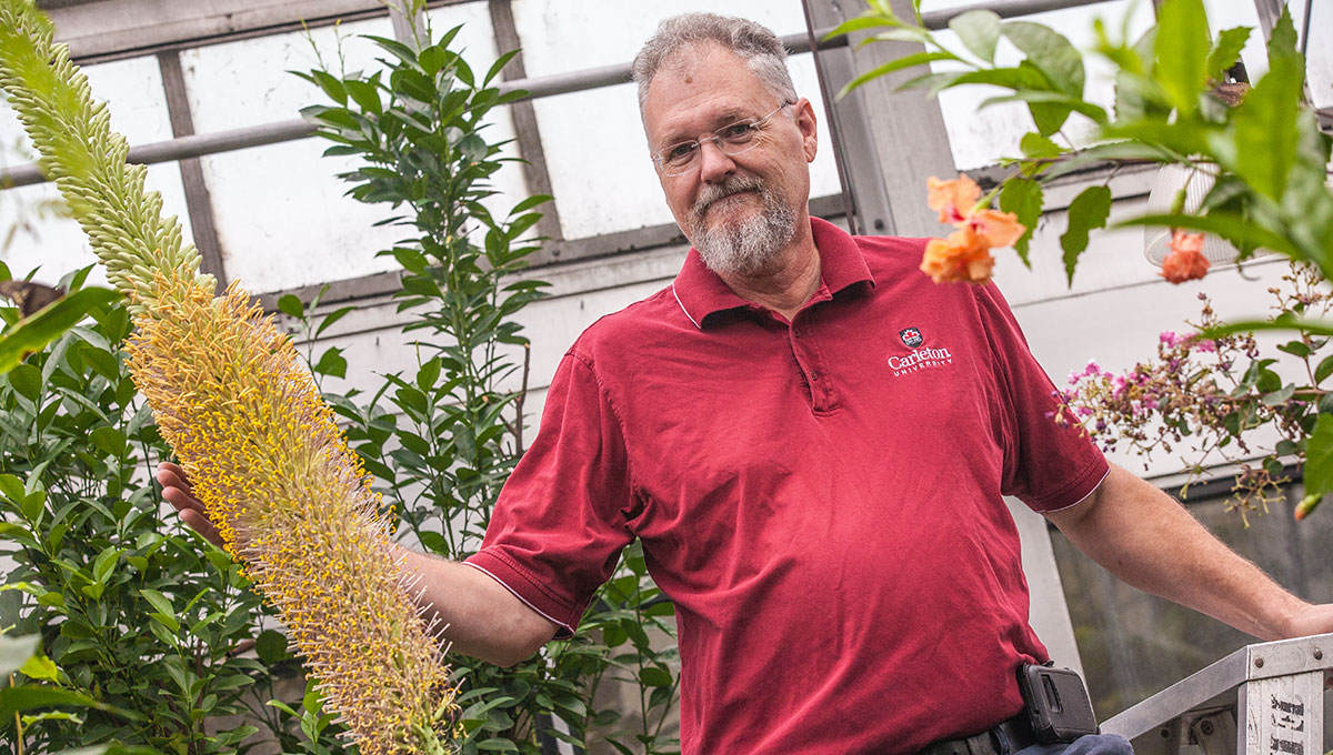 Colossal Carleton Blossom Astounds Biologists