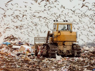 Photo for the news post: All-you-can-eat landfill buffet spells trouble for birds
