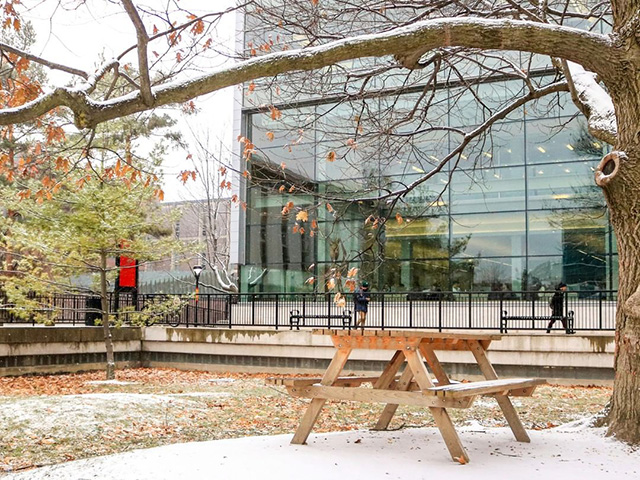 A snowy scene in the Quad. An empty bench can be seen under a tree at Carleton University.