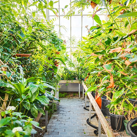 A greenhouse on the Carleton University campus