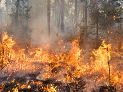 Photo for the news post: Fighting Forest Fires with Modelling and Simulation