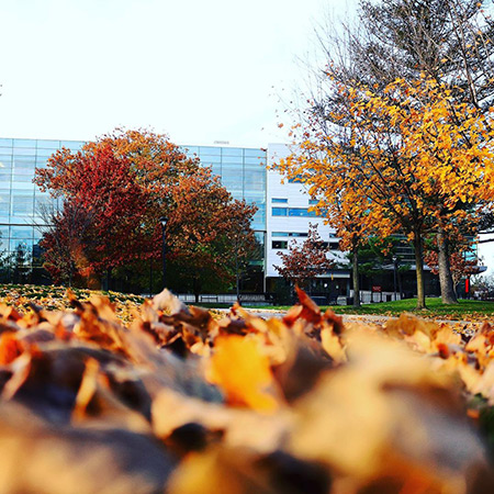 Leaves cover the quad on the Carleton University campus