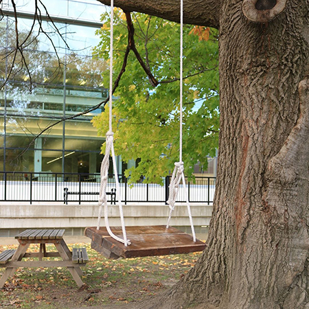 A swing hanging from a tree on campus