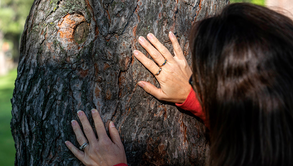 Stopping the Spread of the Mountain Pine Beetle