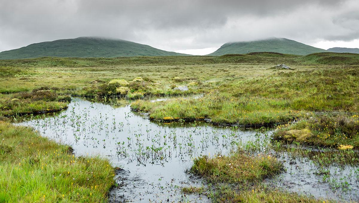 A view of Rannoch moor, between moor and marsh, in the rain.