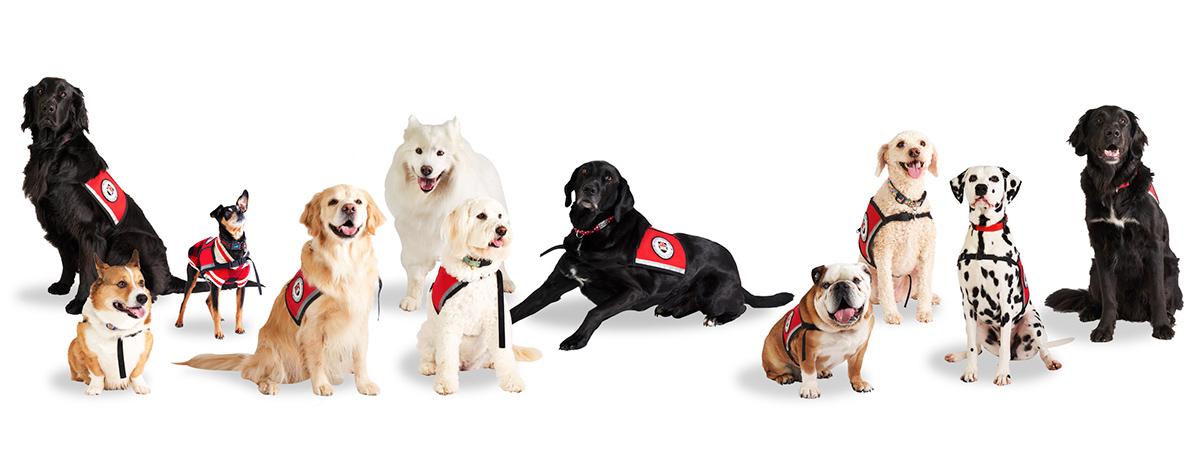 Carleton University Therapy Dogs