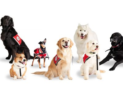 Photo for the news post: Carleton University Therapy Dogs Offering Virtual Cheer on Instagram