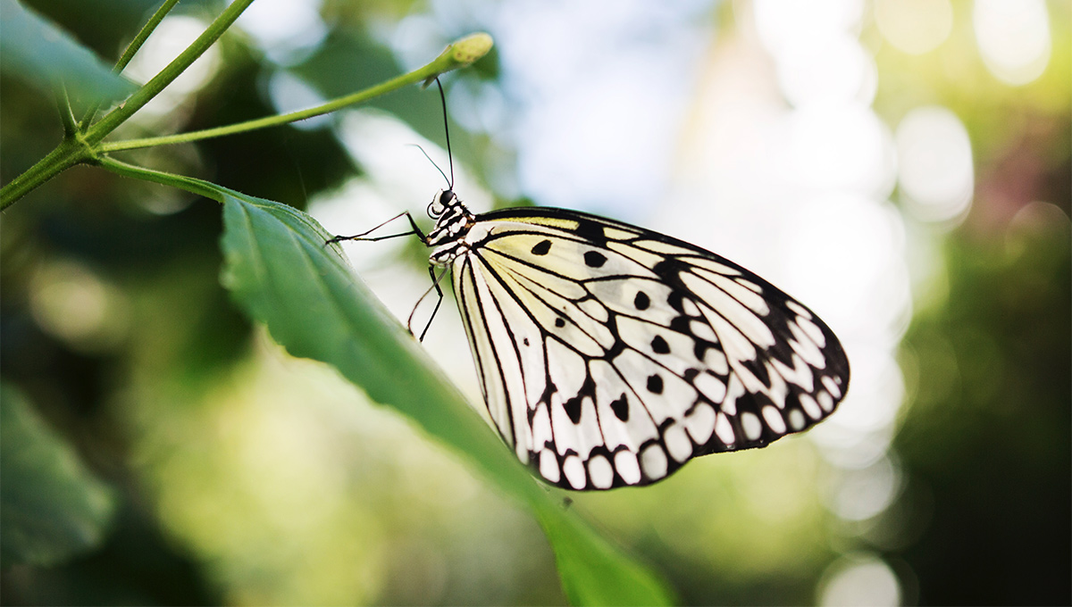 Twenty Years of Floating Beauties at Carleton Butterfly Show