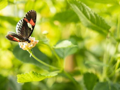 Photo for the news post: Virtual Biology Butterfly Show Comes in for a Landing