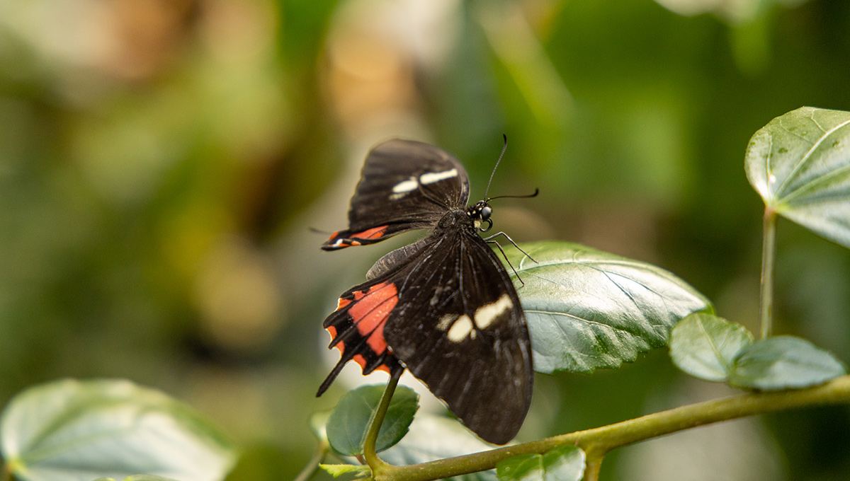 Virtual Biology Butterfly Show Comes in for a Landing
